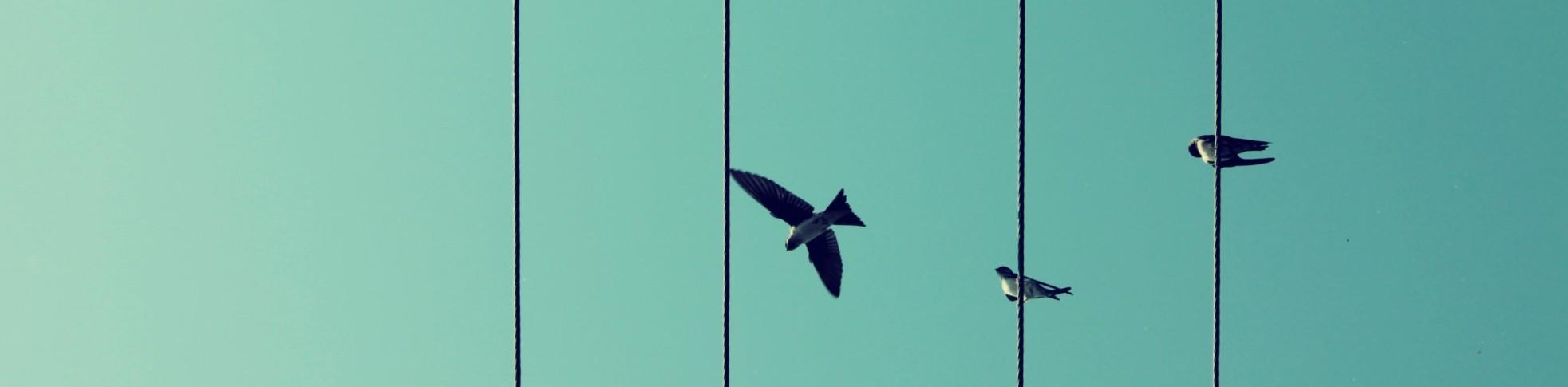 birds-209280